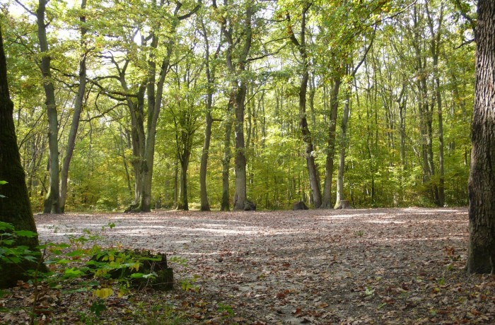 10 HECTARES FOREST